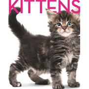 Kittens Cubebook